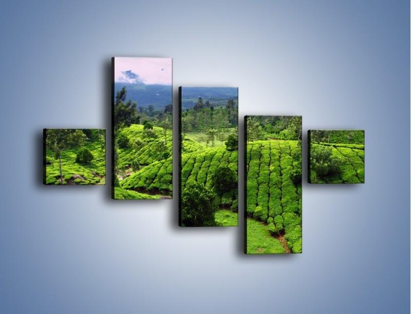 Obraz na płótnie – Rozległa zielona kraina – pięcioczęściowy KN872W3