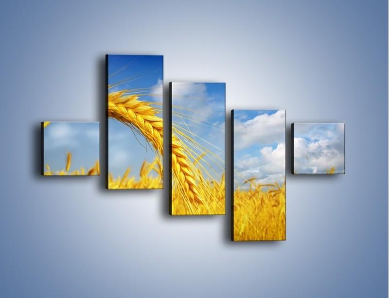 Obraz na płótnie – Pole pełne złota – pięcioczęściowy KN962W3