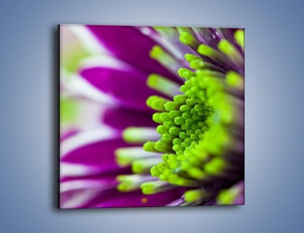 Obraz na płótnie – Kwiat fioletowo-zielony w słońcu – jednoczęściowy kwadratowy K099