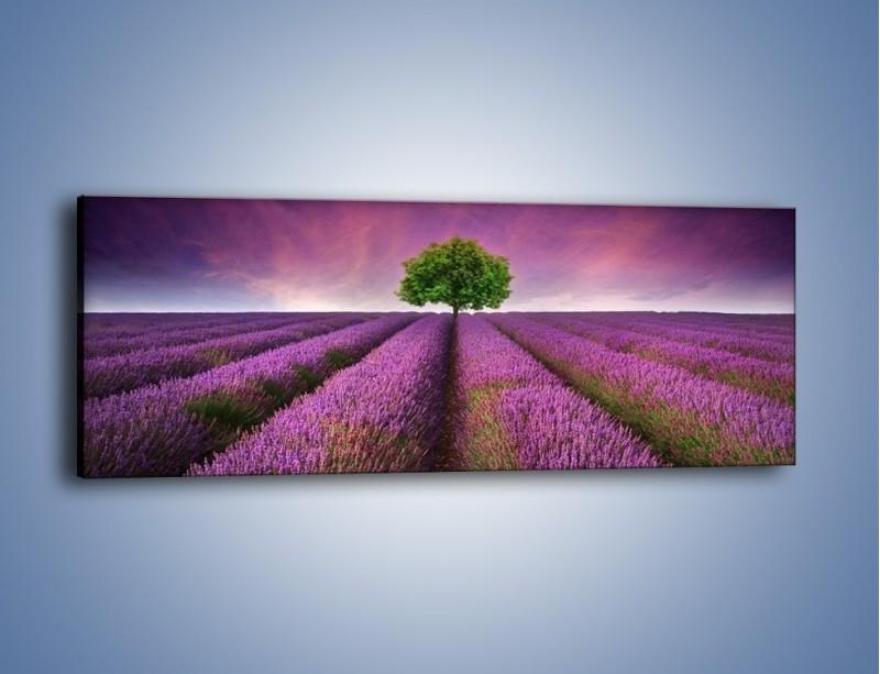 Obraz na płótnie – Droga lawendową do drzewa – jednoczęściowy panoramiczny KN1158A