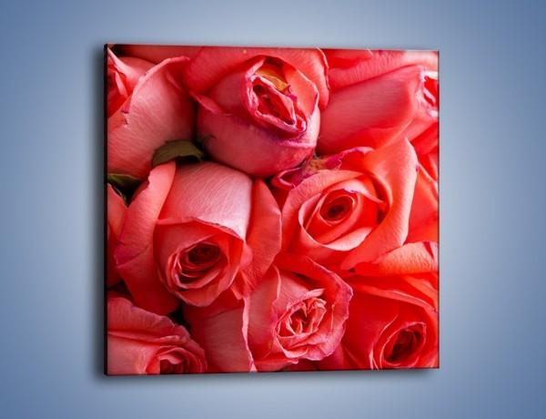 Obraz na płótnie – Tylko widoczne róże – jednoczęściowy kwadratowy K1004