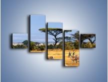 Obraz na płótnie – Antylopy w słonecznej afryce – pięcioczęściowy Z003W3