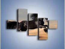 Obraz na płótnie – Czarny koń w galopie – pięcioczęściowy Z008W3