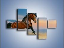 Obraz na płótnie – Brązowy koń na pustyni – pięcioczęściowy Z011W3
