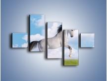 Obraz na płótnie – Białe obłoki i koń – pięcioczęściowy Z019W3