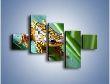 Obraz na płótnie – Kolorowy płaz na liściu – pięcioczęściowy Z026W3
