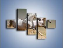 Obraz na płótnie – Białe konie w pustynnym galopie – pięcioczęściowy Z055W3