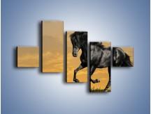 Obraz na płótnie – Bieg z koniem po polanie – pięcioczęściowy Z057W3