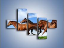 Obraz na płótnie – Galopujące stado brązowych koni – pięcioczęściowy Z172W3