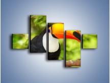 Obraz na płótnie – Kolorowy dziób tukana – pięcioczęściowy Z195W3