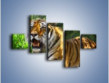 Obraz na płótnie – Cała duma tygrysa – pięcioczęściowy Z199W3