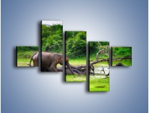 Obraz na płótnie – Kąpiel ze słoniem – pięcioczęściowy Z216W3