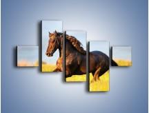 Obraz na płótnie – Dziki koń i jego mięśnie – pięcioczęściowy Z232W3