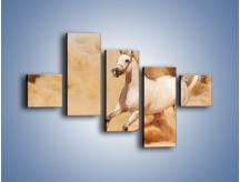 Obraz na płótnie – Klacz w tumanach piasku – pięcioczęściowy Z233W3