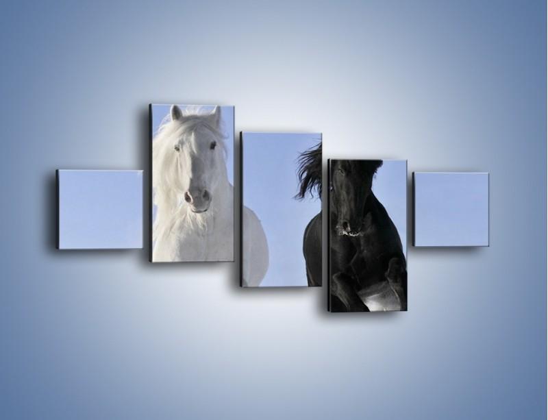 Obraz na płótnie – Czarno-biały wyścig konny – pięcioczęściowy Z263W3