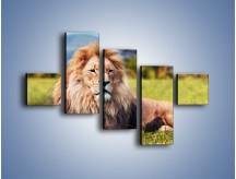 Obraz na płótnie – Dostojny lew na sawannie – pięcioczęściowy Z282W3