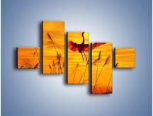 Obraz na płótnie – Czaple i zachód słońca – pięcioczęściowy Z302W3
