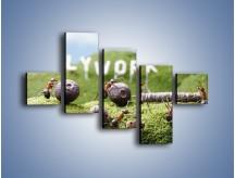 Obraz na płótnie – Ciężka praca mrówek – pięcioczęściowy Z308W3