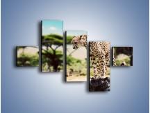 Obraz na płótnie – Cała zwinność geparda – pięcioczęściowy Z315W3