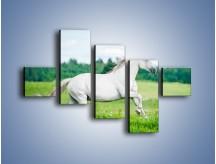 Obraz na płótnie – Biały koń i leśna polana – pięcioczęściowy Z317W3