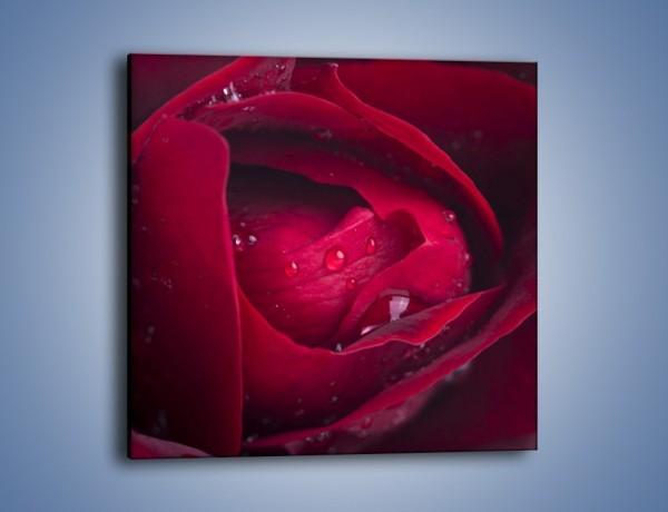 Obraz na płótnie – Ukryte myśli róży – jednoczęściowy kwadratowy K1018