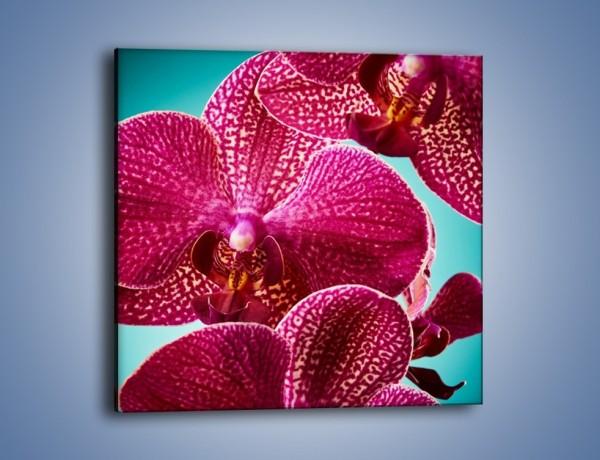 Obraz na płótnie – Płaty kwiatów i niebieskie tło – jednoczęściowy kwadratowy K1019