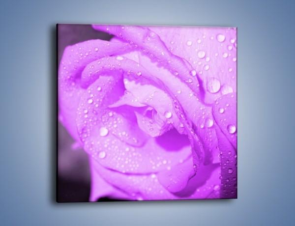 Obraz na płótnie – Jasno fioletowe skropione płatki – jednoczęściowy kwadratowy K1020