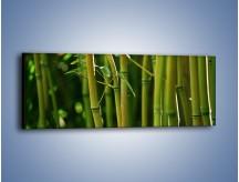 Obraz na płótnie – Bambusowe łodygi z bliska – jednoczęściowy panoramiczny KN118