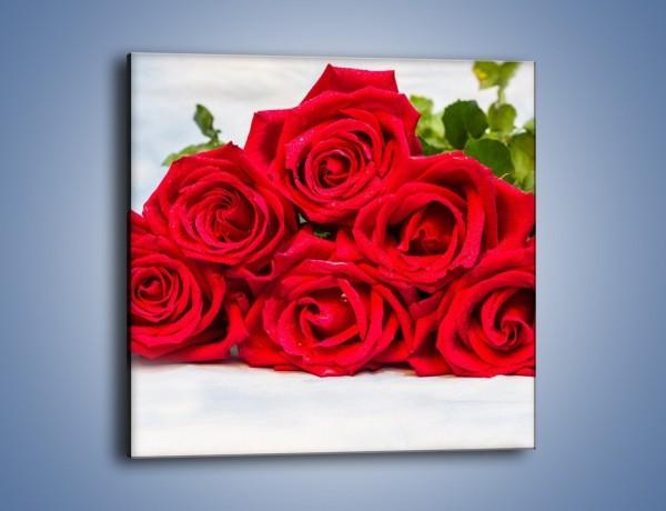 Obraz na płótnie – Czerwone róże bez kolców – jednoczęściowy kwadratowy K1021