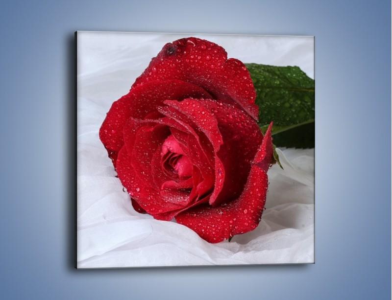 Obraz na płótnie – Bordowa róża na białej pościeli – jednoczęściowy kwadratowy K1023