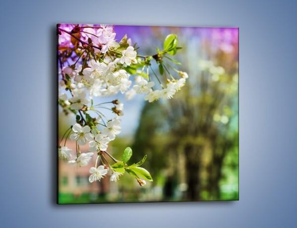 Obraz na płótnie – Jabłoń w parku – jednoczęściowy kwadratowy K1026