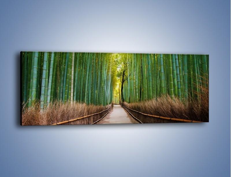 Obraz na płótnie – Bambusowy las – jednoczęściowy panoramiczny KN1187A