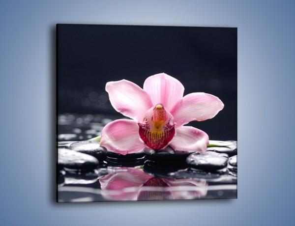 Obraz na płótnie – Kwiat z żółtym krążkiem – jednoczęściowy kwadratowy K1030
