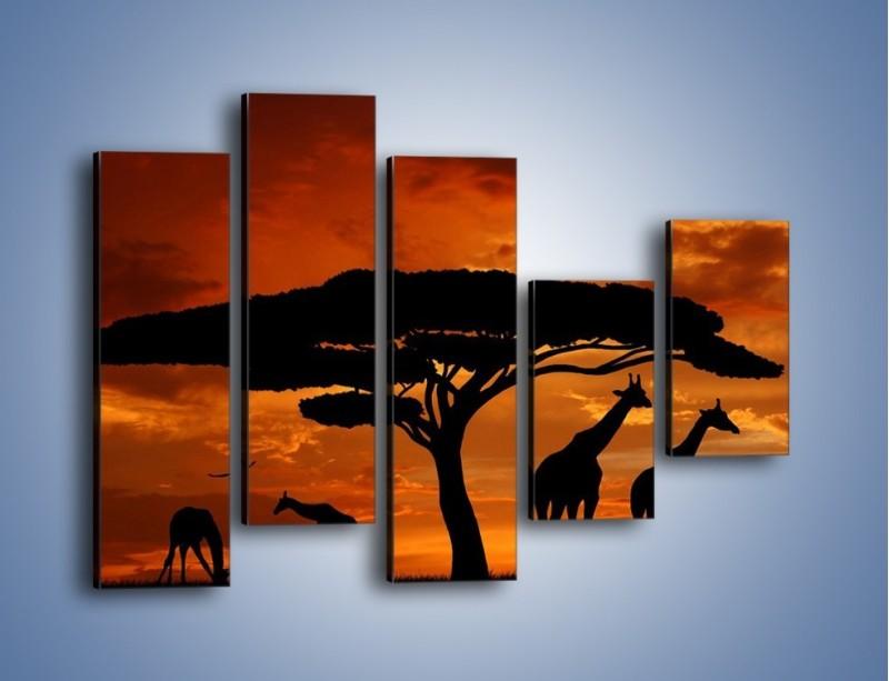Obraz na płótnie – Żyrafy wieczorową porą – pięcioczęściowy GR266W4