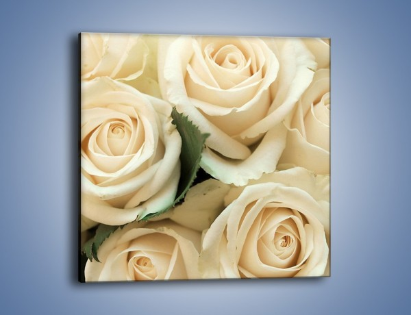 Obraz na płótnie – Głowy śmietanowych róż – jednoczęściowy kwadratowy K105