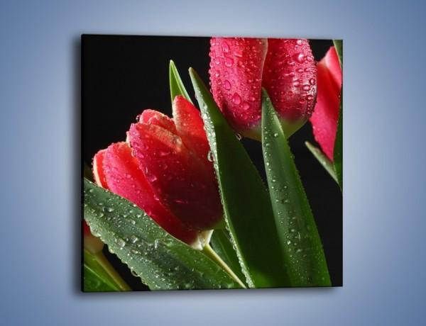 Obraz na płótnie – Tulipany po deszczu – jednoczęściowy kwadratowy K112