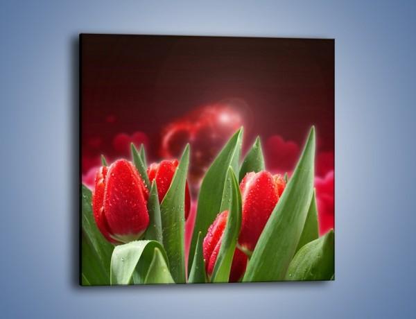 Obraz na płótnie – Mokre tulipany w świetlnej osłonie – jednoczęściowy kwadratowy K114
