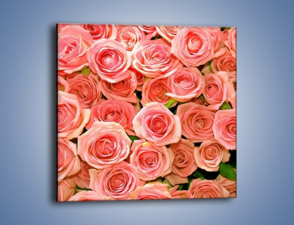 Obraz na płótnie – Łososiowe głowy róż – jednoczęściowy kwadratowy K116