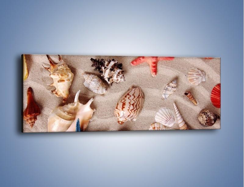 Obraz na płótnie – Kolorowe skorupiaki – jednoczęściowy panoramiczny KN1214A