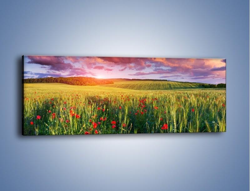Obraz na płótnie – Polskie pole pełne maków – jednoczęściowy panoramiczny KN1227A