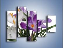 Obraz na płótnie – Biało-fioletowe krokusy – pięcioczęściowy K020W4