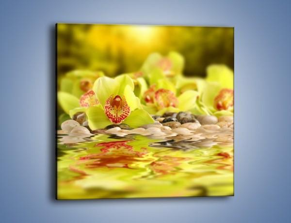 Obraz na płótnie – Wodne odbicie storczyków – jednoczęściowy kwadratowy K129