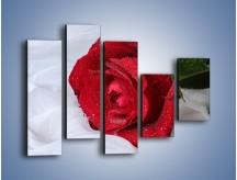 Obraz na płótnie – Bordowa róża na białej pościeli – pięcioczęściowy K1023W4