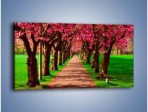 Obraz na płótnie – Aleja kwitnącej wiśni – jednoczęściowy panoramiczny KN1238A