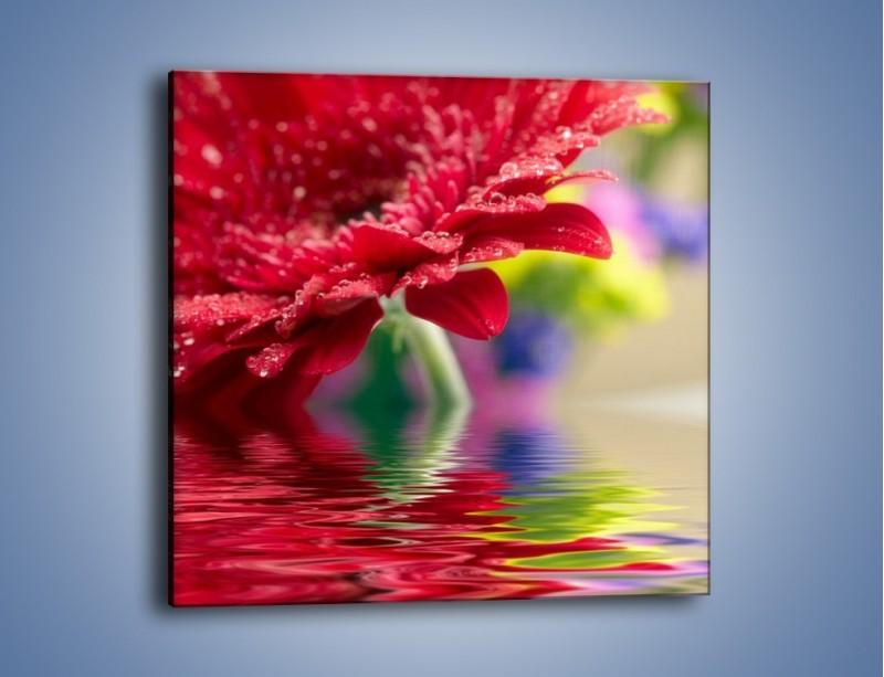 Obraz na płótnie – Bordowy kwiat odbity w wodzie – jednoczęściowy kwadratowy K138