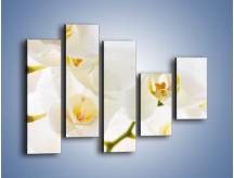 Obraz na płótnie – Białe storczyki blisko siebie – pięcioczęściowy K811W4