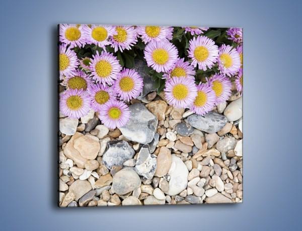 Obraz na płótnie – Kolorowe kamienie czy małe kwiatuszki – jednoczęściowy kwadratowy K146
