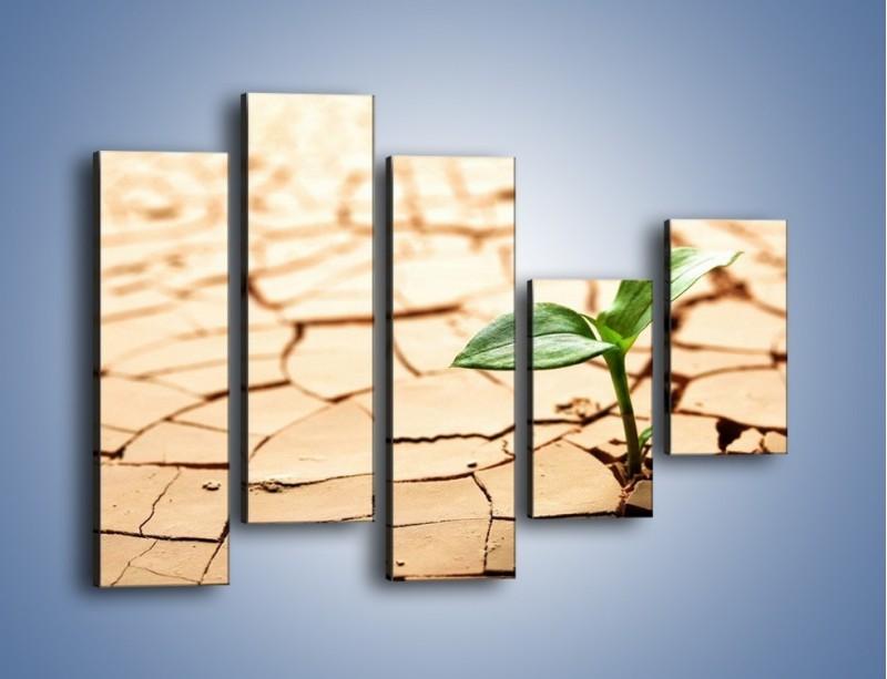 Obraz na płótnie – Łodyga w spękanej ziemi – pięcioczęściowy KN013W4