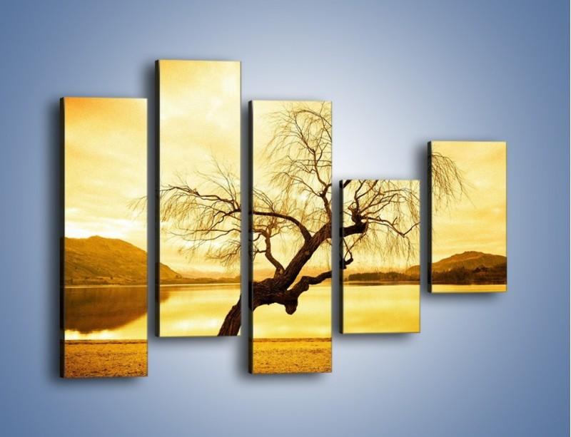Obraz na płótnie – Pochylone drzewo w sepii – pięcioczęściowy KN1033W4