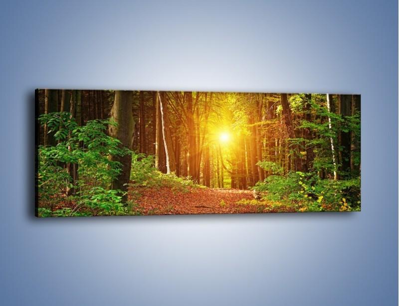 Obraz na płótnie – Polski krajobraz leśny – jednoczęściowy panoramiczny KN1257A